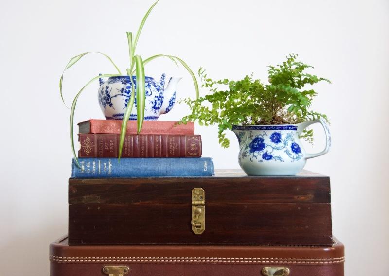 teapot planter spider plant fern