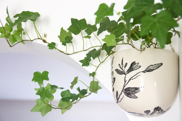 English ivy wall planter