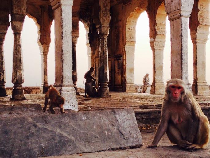 monkey temple India travel