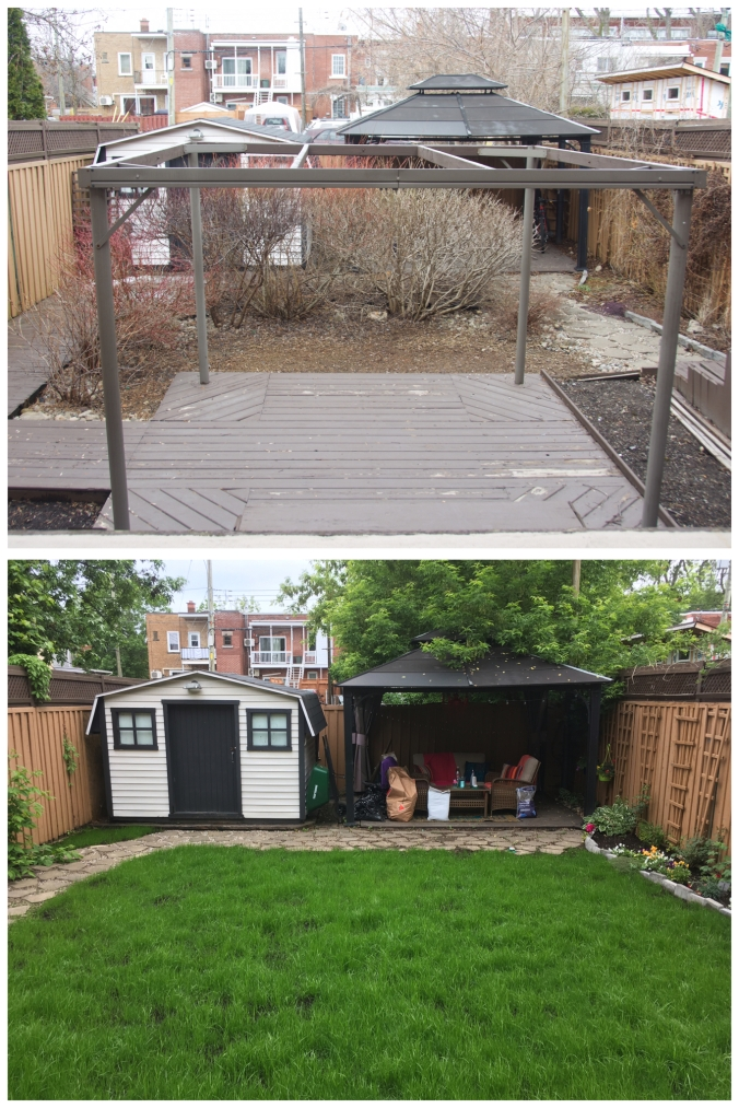 backyard DIY remodel renovation growing grass from seed yard before and after