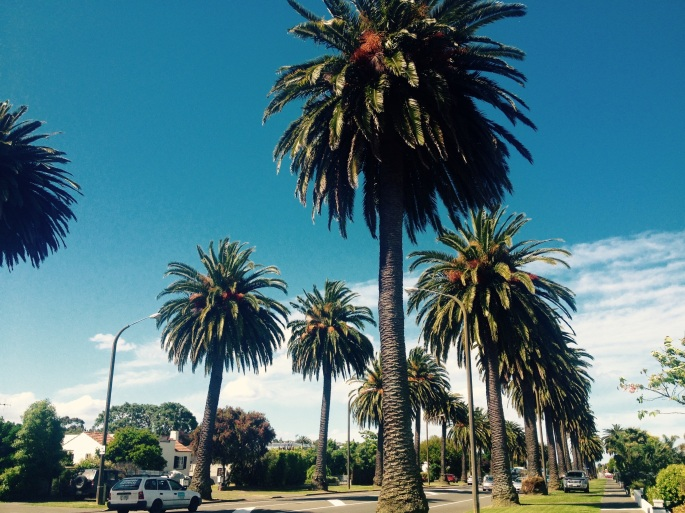 New Zealand palm tree travel