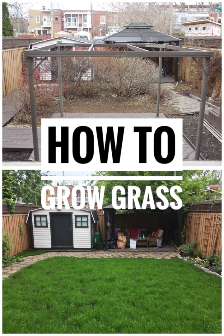 DIY Backyard Remodel | How To Grow Grass From Seed In Your Yard