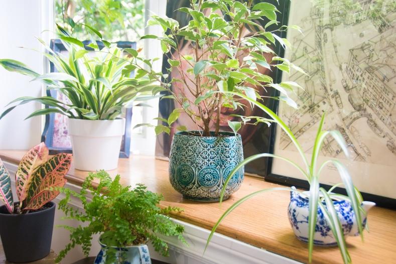 planters plant pots Homesense Home Depot vintage teapot fern ficus spider plant eclectic antique bohemian home living room decor