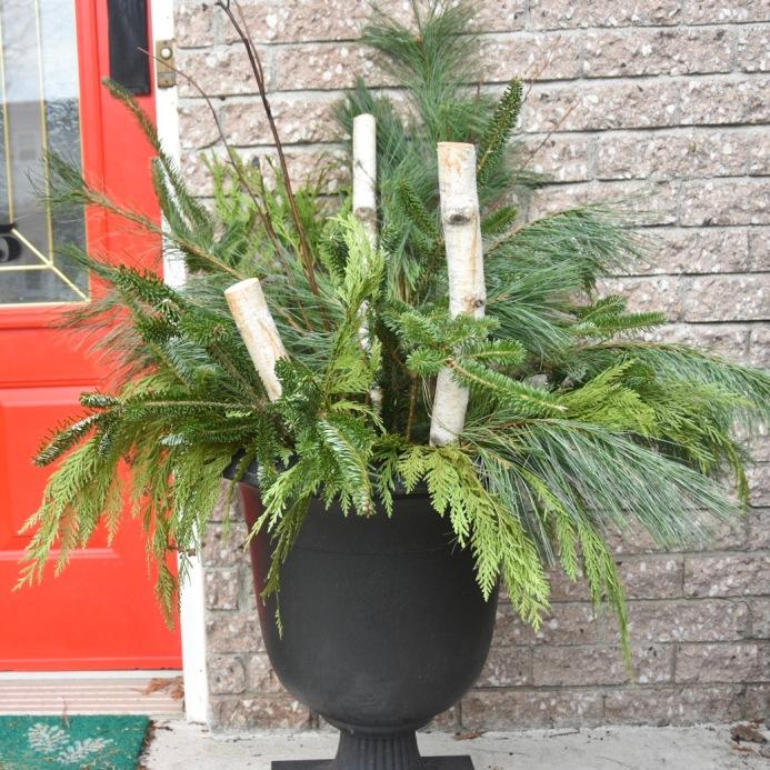 DIY Christmas Holiday planter display cedar fir birch pine branches