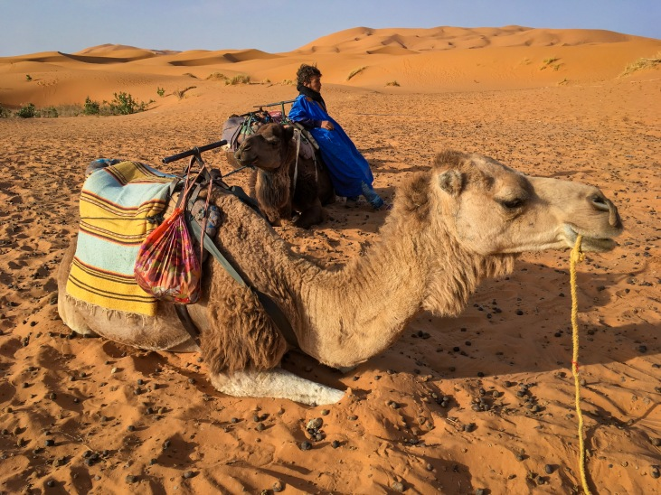 Sahara Desert camel Morocco travel Montreal lifestyle fashion beauty blog
